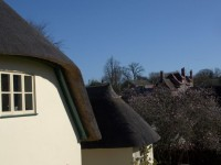 Row of thatch